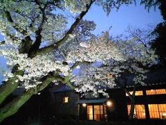 吉祥庵の桜