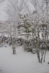 早朝の積雪