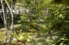 5月末の庭